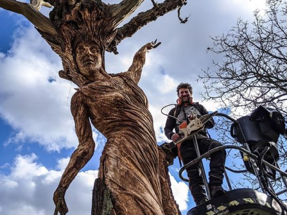 Simon O'Rourke creating an oak maiden using Stihl battery chainsaw