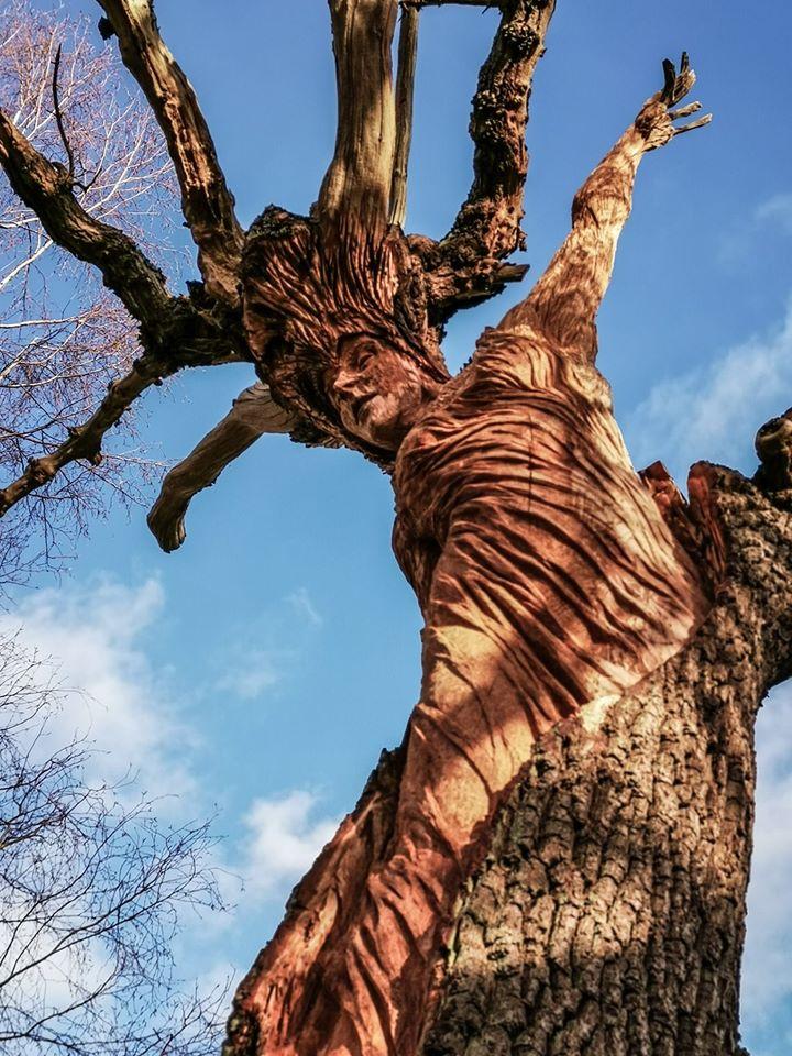 An Oak Maiden by Simon O'Rourke
