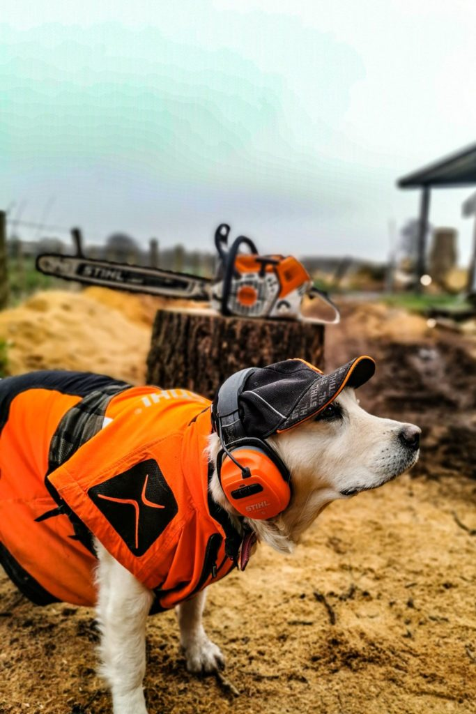 When poppy met stihl ear protection