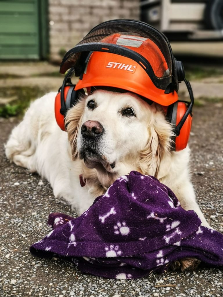 Poppy met stihl helmet and ear protection