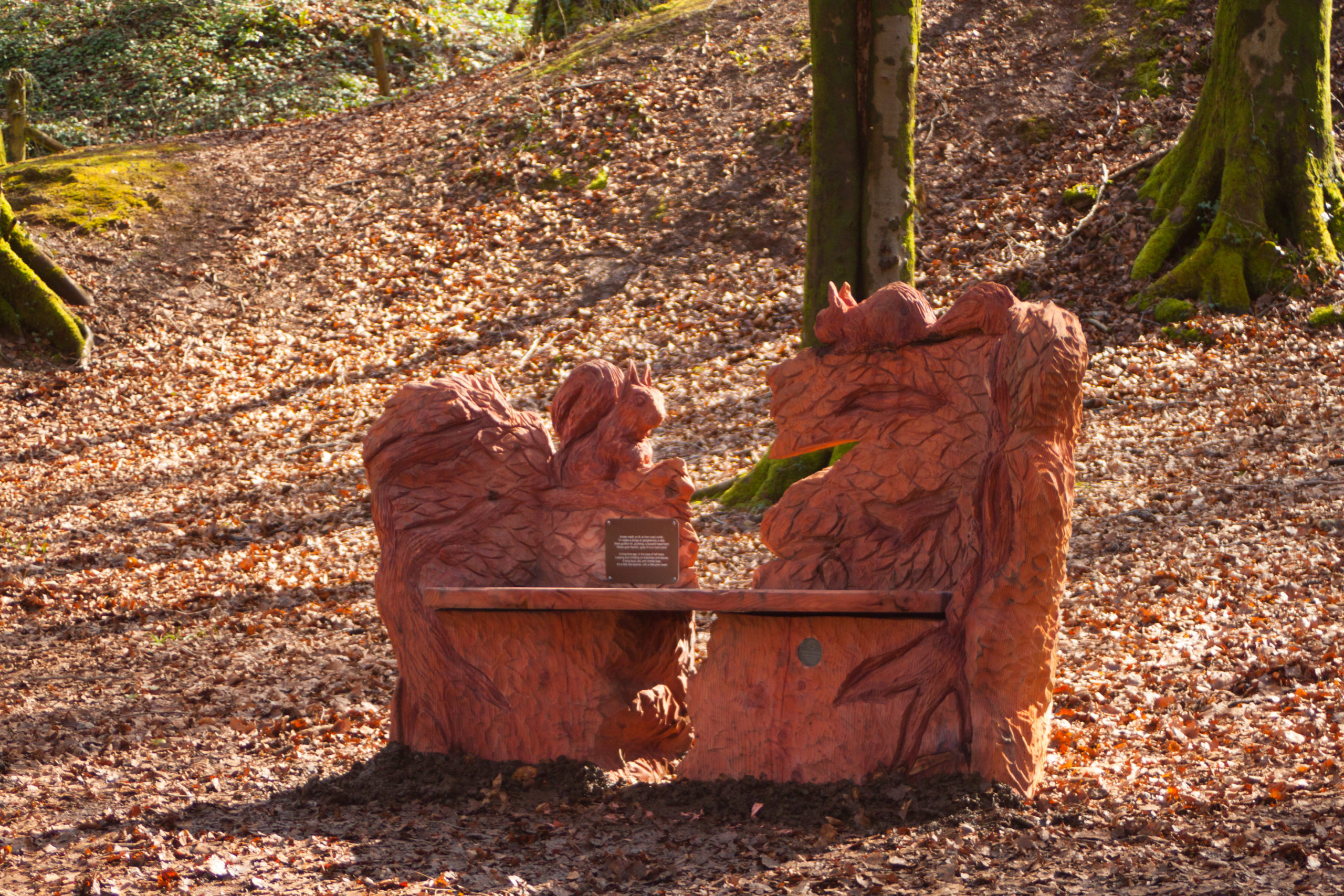 A redwood bench with red squirrel details as part of fforest fawr woodland sculpture trail