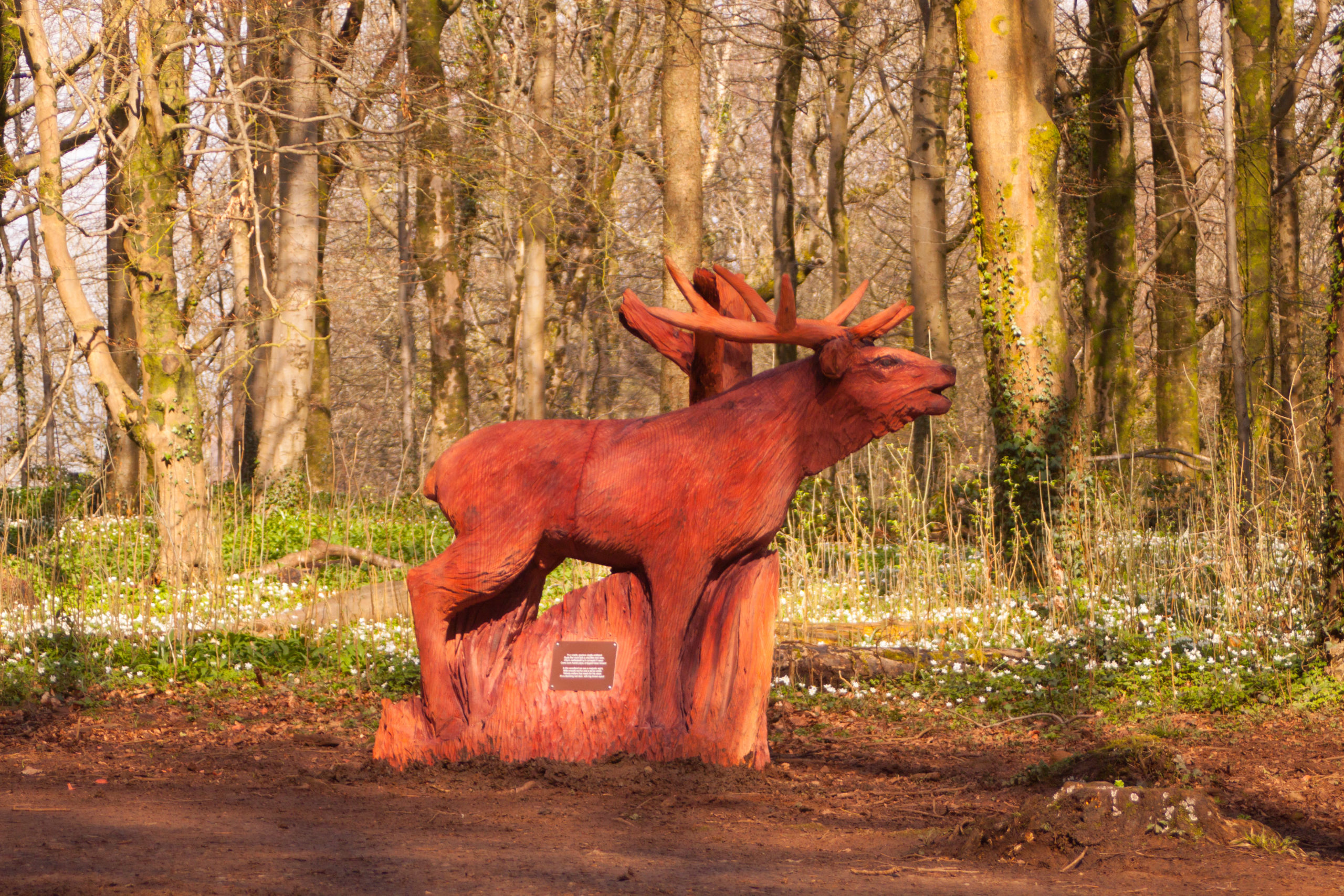 Simon O'Rourkes fforest fawr woodland sculpture trail: A Red Deer. Lifesized, created with chainsaws from redwood