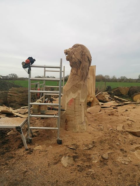a 12' sri lankan lion sculpture in oak in progress. the head is carved but the rest is stripped timber with scaffolding in the foreground