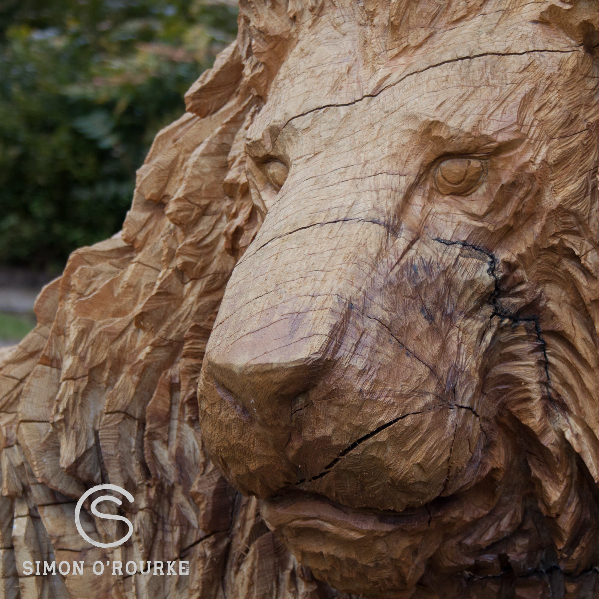 Wood or Bronze sculpture? A close up of 'The Guardian' by Simon O'Rourke. It shows cracks in the nose of the oak lion, and the changing colours of oak sculpture.