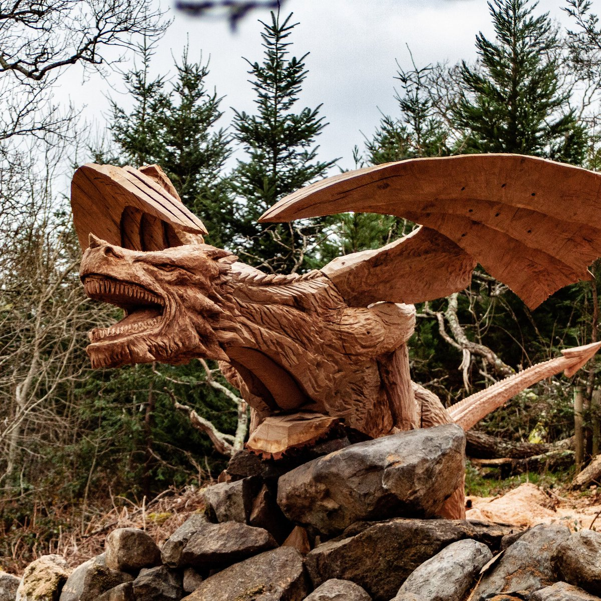 wooden carved dragon with outstretched wings by simon o rourke.