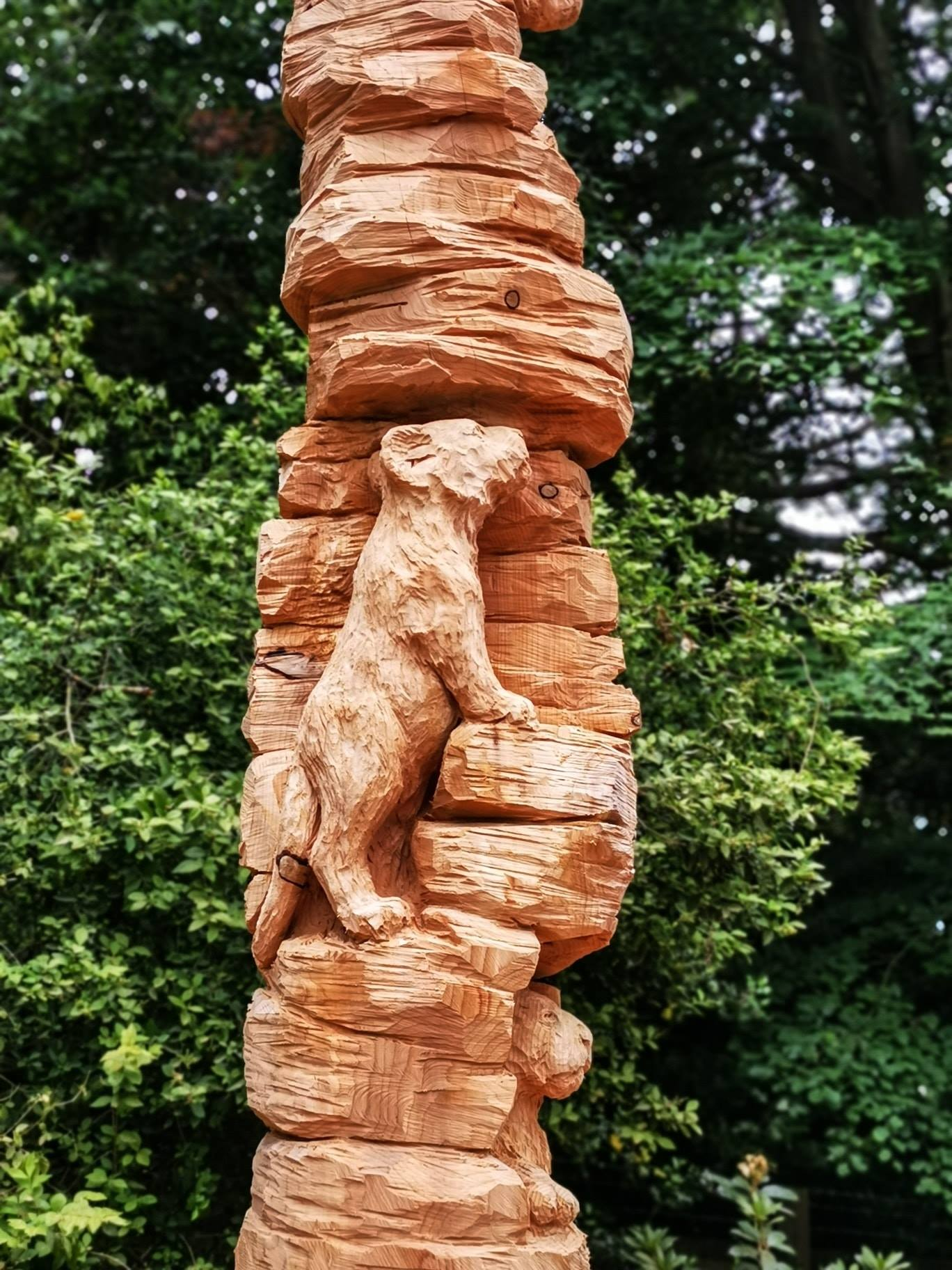 close up of a lion cub carved into a tree trunk by simon o'rourke