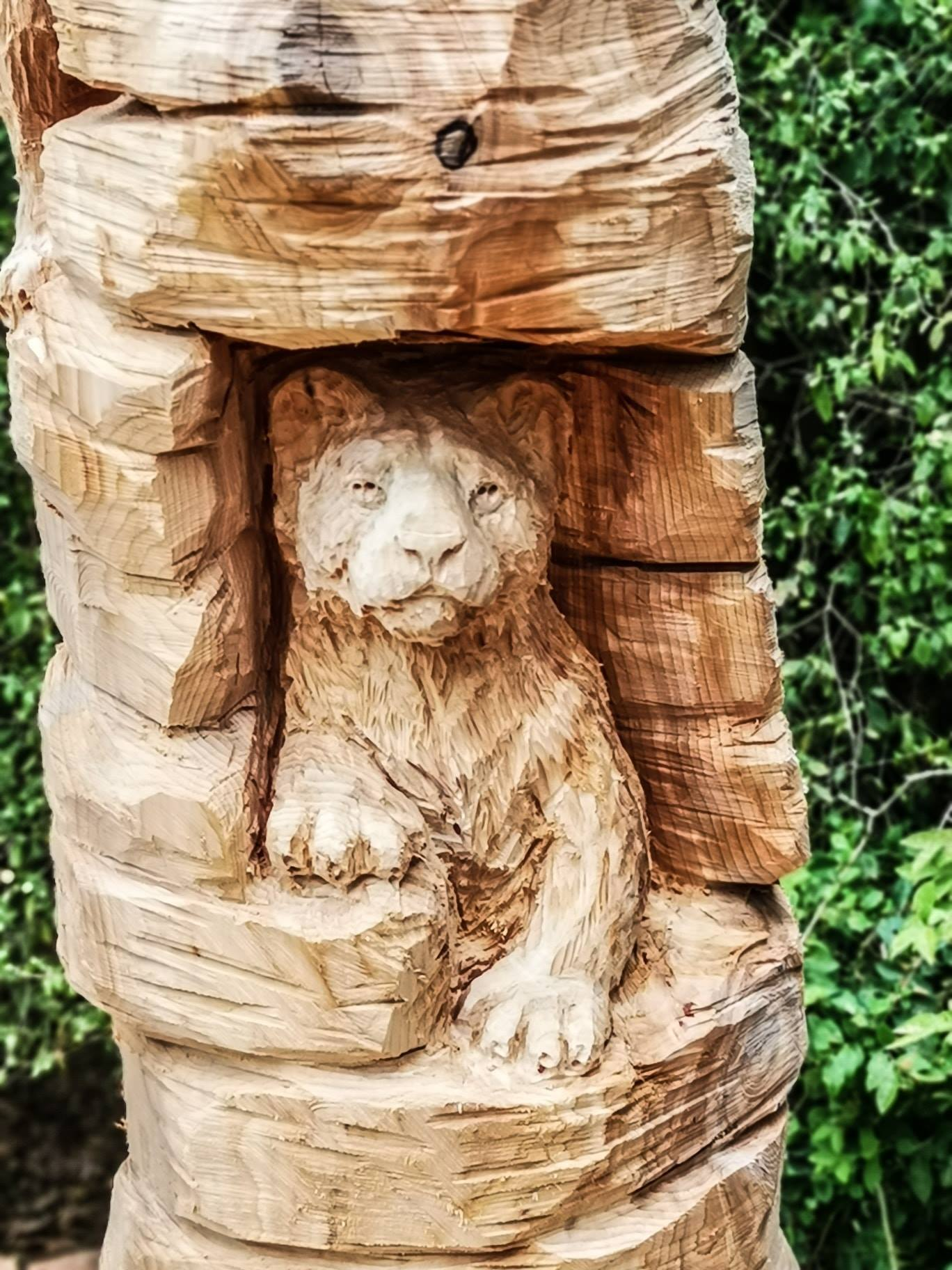 close up of a lion cub carved by simon o'rourke. the photo shows the texture of the chest fur, created with on of his favourite manpatools for creating texture on sculptures, the triangle cutter