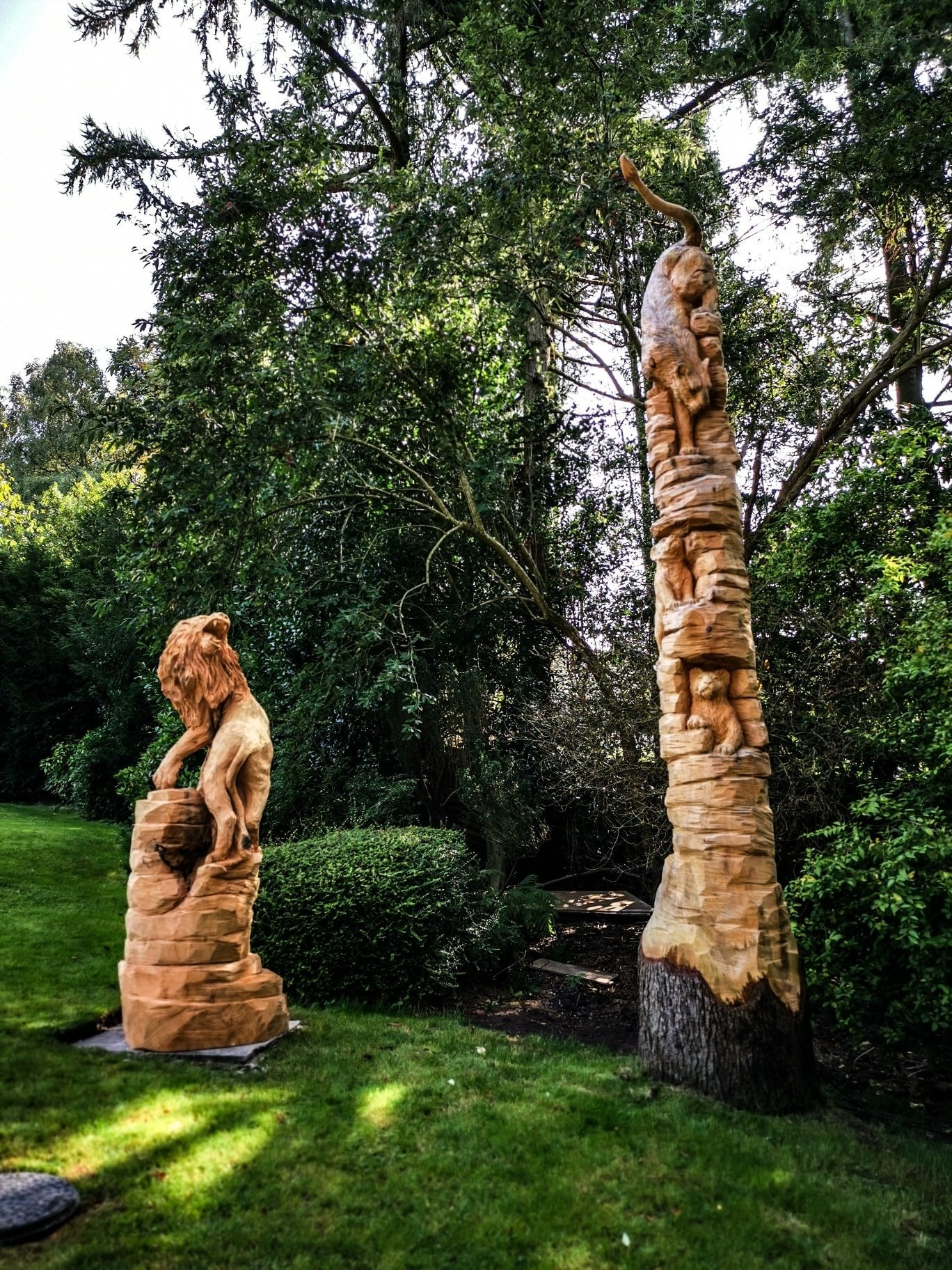 Tips for carving big cats by simon o'rourke. Photo shows a lion family Simon created from two separate tree trunks. One shows a male lion twisted to look in the direction of the second trunk which shows a lioness climbing down the trunk to reach a cub.