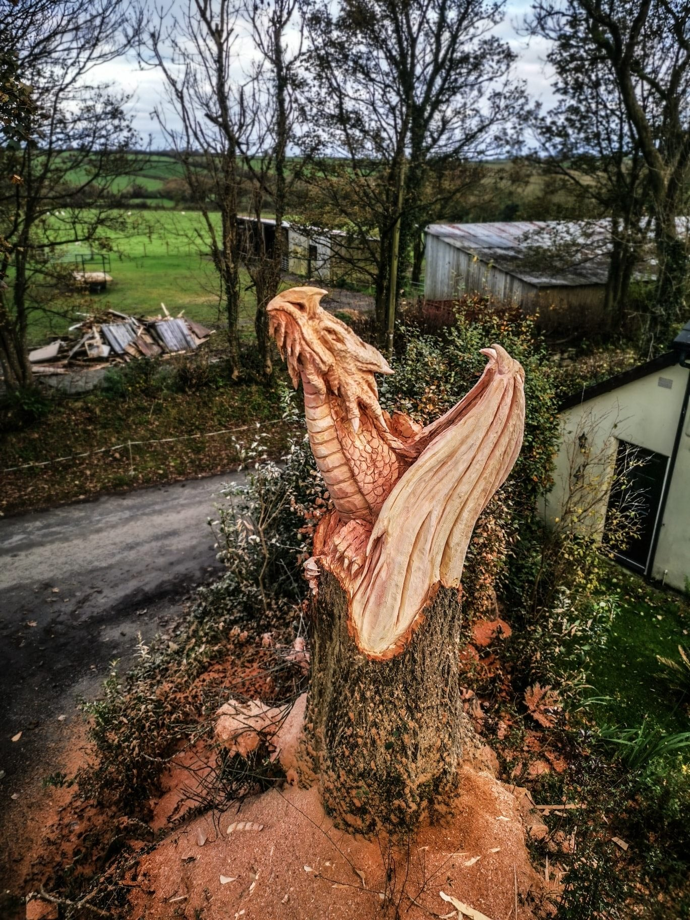 view looking down on a sculpture of a dragon emerging from a tree trunk. Sculpture is by artist simon o'rourke and transformed a tree killed by ash dieback into a piece of art