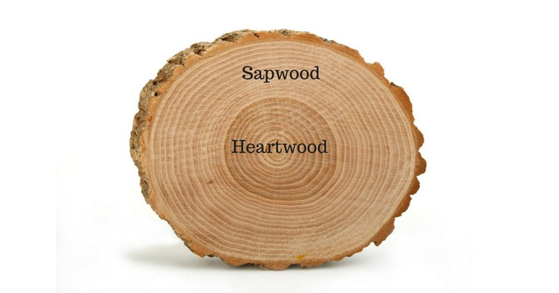 cross section of a tree trunk showing the heartwood and sapwood