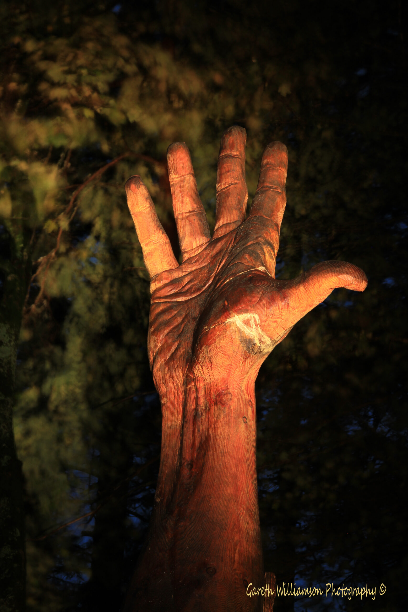 the giant hand of vrynwy by simon o'rourke. Photograph is taken at night and shows an illuminated 50ft hand sculpture surrounded by woodland