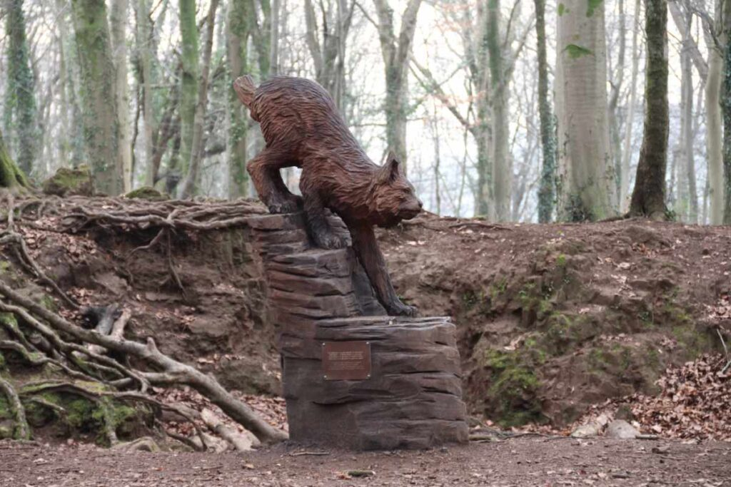 How long will my wood sculpture last? Photo shows Simon's European Lynx in fforest fawr. At two years old, it is now a deep reddish-brown.