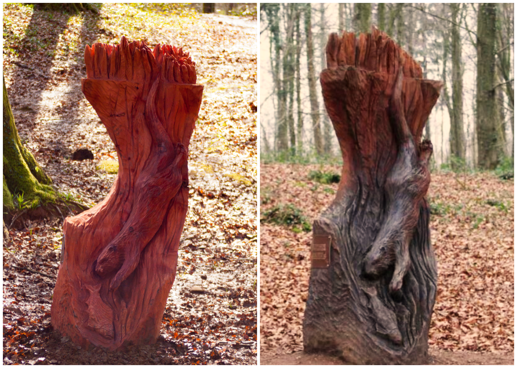 How long will my wood sculpture last? Photo shows a comparison of a redwood sculpture two years on. The sculpture is the brown otter in Fforest Fawr. In the first the wood is a warm, vivid red colour. After two years it is fully in tact, but the shadows appear deeper and it is turning a deep brown with cold tones.