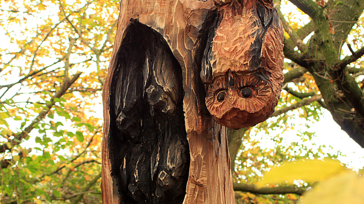 Woodland sculpture trails by simon o'rourke. sculpture of an owl hanging upside down next to a group of bats in Meadow Park