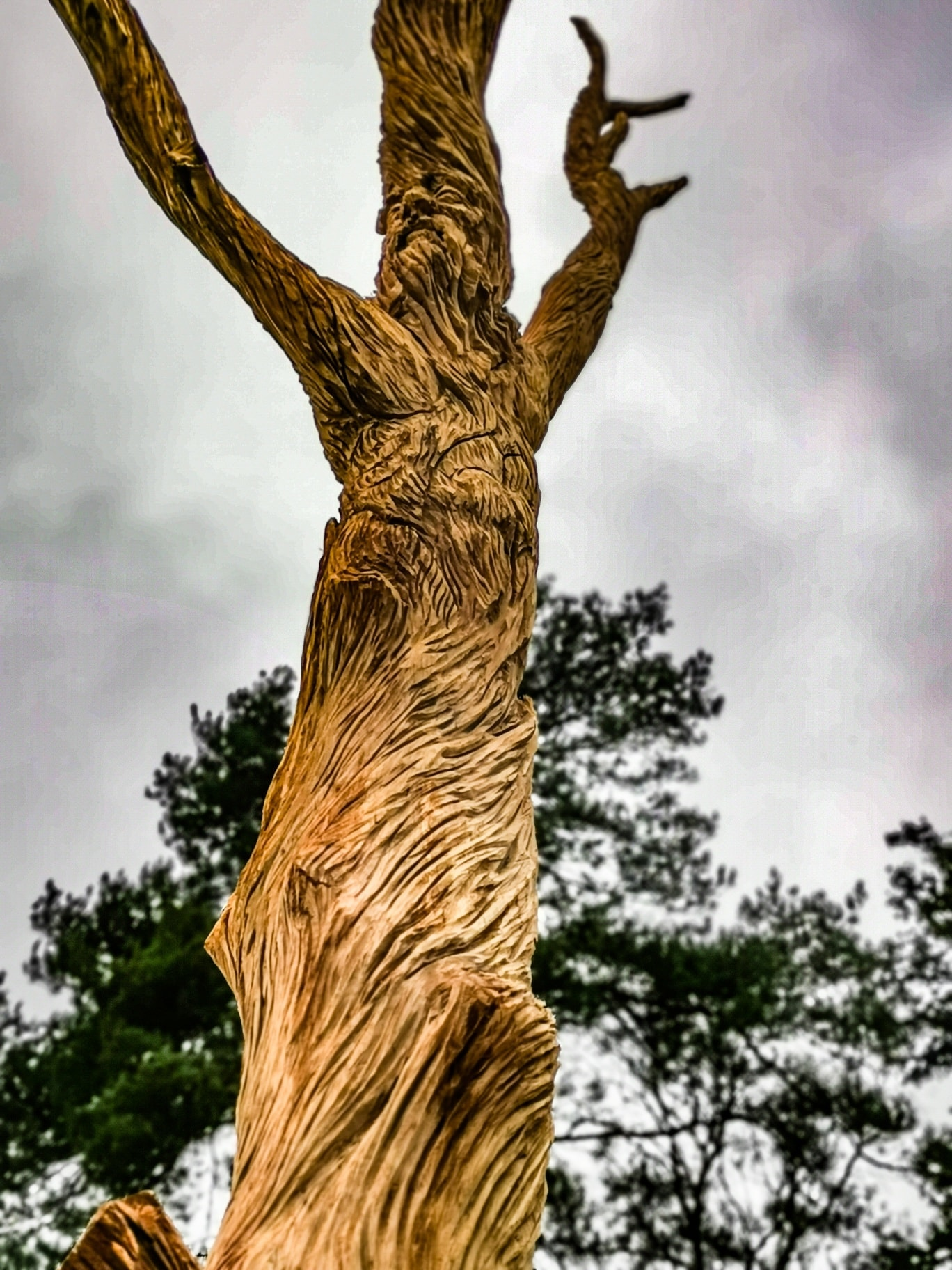 the old oak father sculpture by simon o'rourke