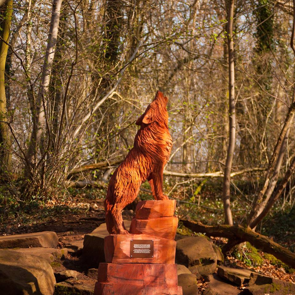 What is the best wood for a sculpture? Redwood ranks at No 3. Photo shows an example of a redwood sculpture, the european wolf at Fforest Fawr