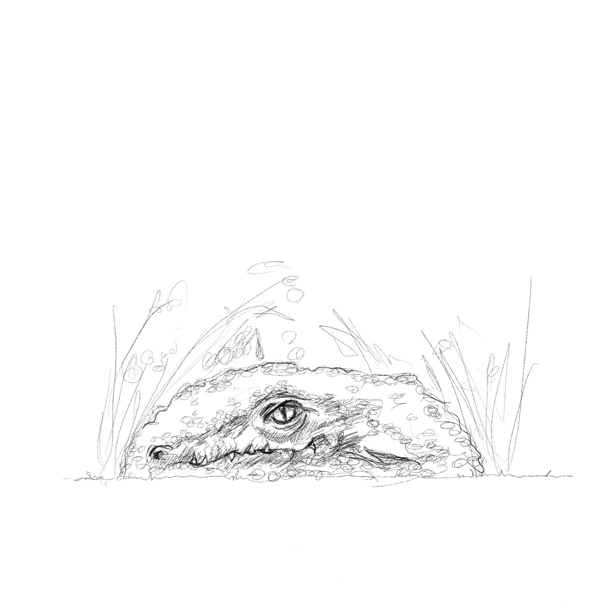 sketch of a crocodile emerging from long grass. the sketch is a proposal by sculpture simon o'rourke. sketches like this are a vital part in commissioning the best sculpture.