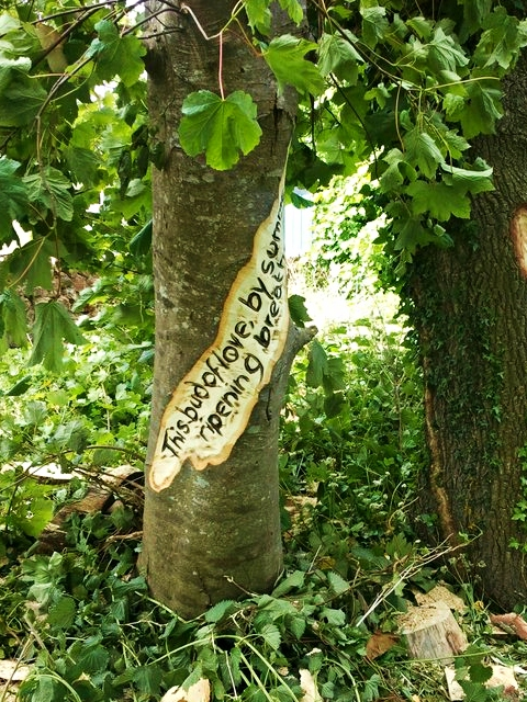 tree trunk engraved with a quote from Romeo and Juliet