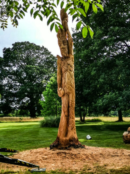 ThA sculpture of an ent in a monkey puzzle tree trunk. It is surrounded by sawdust. Clean up of this mess is a factor to consider whren you Commission an On-Site Chainsaw Carving Sculpture