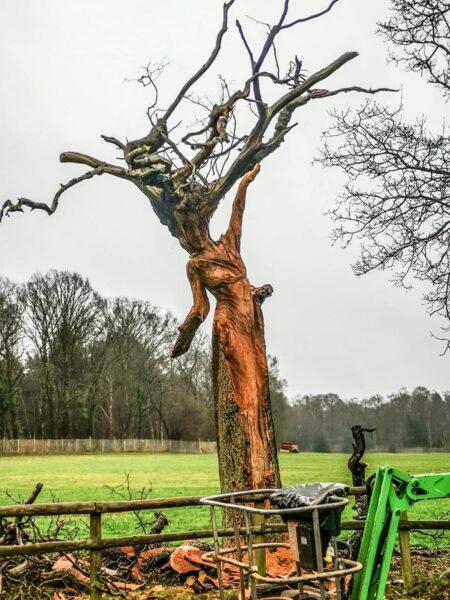 oak maiden sculpture in process