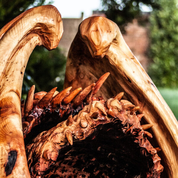 Care for a tree carving sculpture. Photo shows a close up of a yew dragon mouth sculpture treated with decking oil