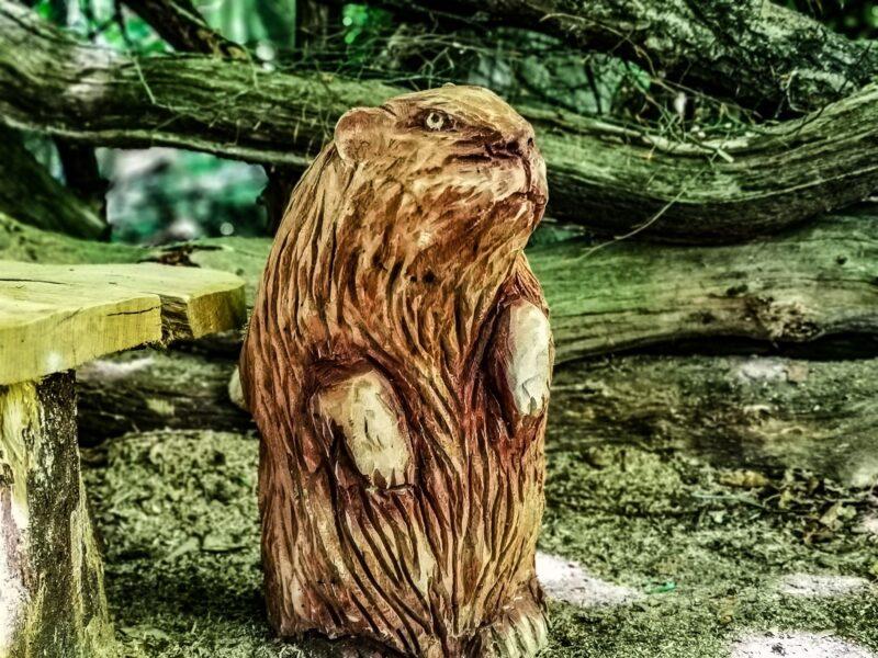 mrs beaver, an oak sculpture from simon o'rourke's narnia beaver den sculptures scene