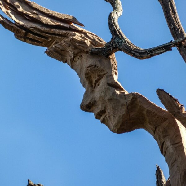 close up of a woman's face carved into an oak branch